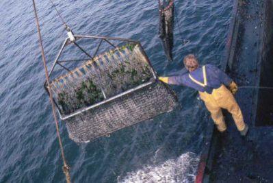 Oprez pri konzumaciji školjaka i morskih jaja u Istri