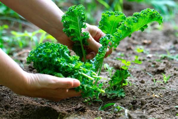 Namirnice koje biste pod svaku cijenu trebali kupovati iz organskog uzgoja