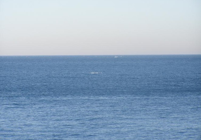 Debla veličine 12 metara plutaju uz zapadnu obalu Istre