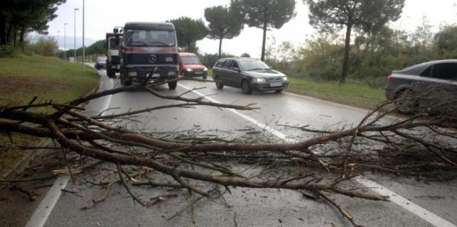 Stablo palo na cestu Poreč – Baderna  u blizini dvorane Žatika