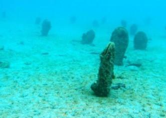 Periske se vratile u istarsko podmorje