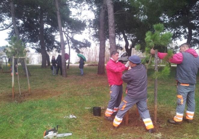 Vijećnici i građani Novigrada sadnjom stabala protiv uzurpacije zelenog priobalnog pojasa