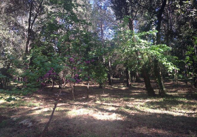 Završena prva faza uređenja dijela šume u naselju Bolnica