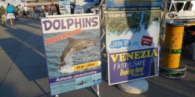 Dupini kao nova turistička ponuda u Istri
