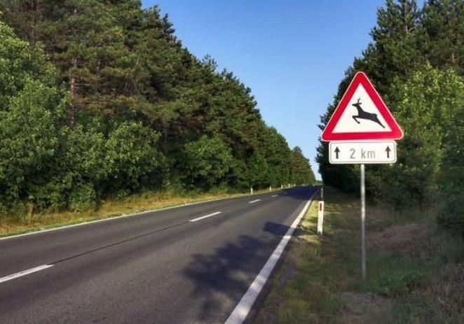 Na cestama u Istri stradale dvije srne, divlja svinja i zec