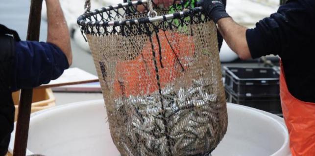 Povrijeđeno je dostojanstvo istarskih ribara