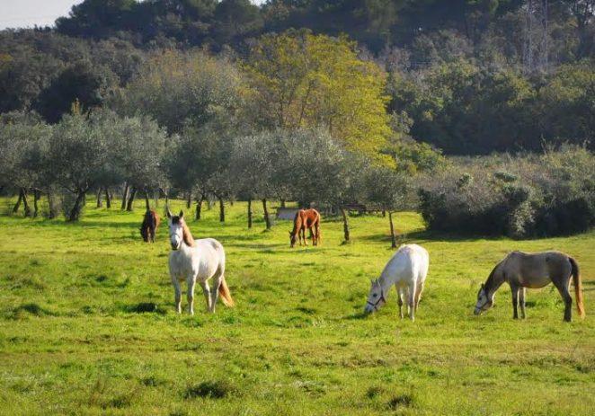 Kod Višnjana konji bez nadzora
