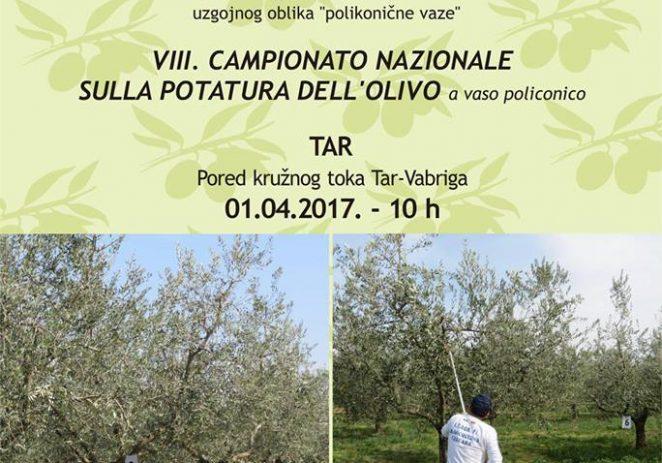 8. nacionalni šampionat rezidbe maslina 1. travnja u Taru