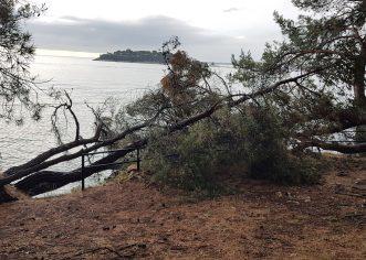 U Poreču srušeno stablo zarobilo obitelj u automobilu, izvlačili ih vatrogasci
