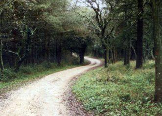 Mikološko-gljivarskom savezu odobrena sredstva za gljivarsku stazu u šumi Kontija kod Vrsara