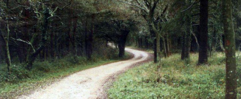 šuma-kontija