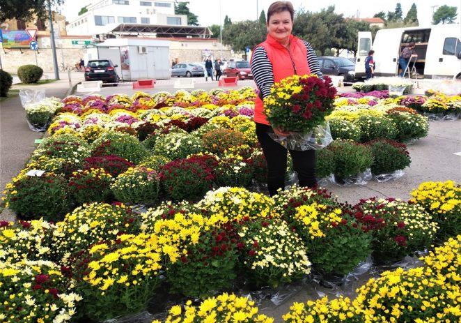 Troje domaćih cvjećara nudi svoje krizanteme