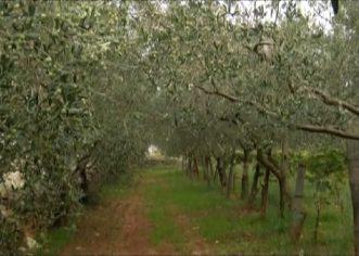 Na Institutu za poljoprivredu i turizam predstavljeni prvi rezultati projekta REDGREENPLANT
