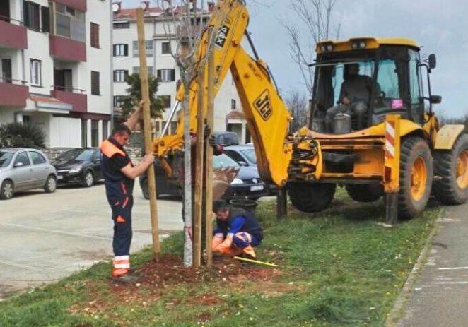 Sadnja novih četrdesetak stabala u Poreču