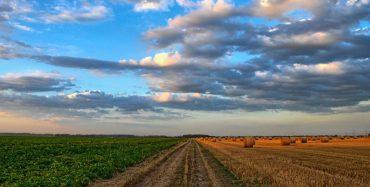 Grad Poreč raspisao Javni natječaj za financiranje programa i projekata organizacija civilnog društva u području poljoprivrede
