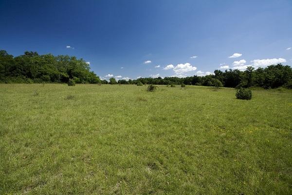 Raspolaganje poljoprivrednim zemljištem u vlasništvu Republike Hrvatske