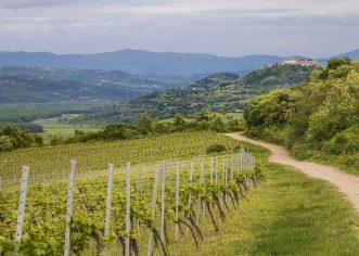 """Otvoren je natječaj za mjeru """"Promidžba vina na tržištima trećih zemalja"""" – vinari, prijavite se!"""