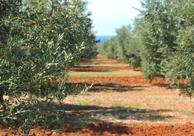 Treću godinu zaredom Ol Istria maslinovo ulje slavilo u Kanadi