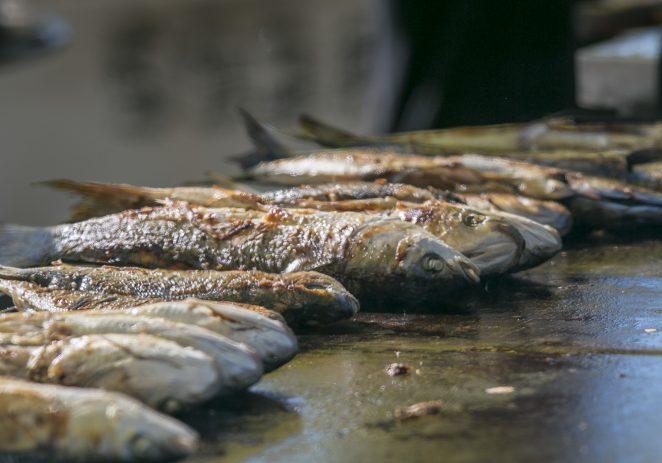Više od tisuću gostiju uživalo na Ribarskoj fešti u Vrsaru koju već četvrt stoljeća priređuje Turistička zajednica Vrsara