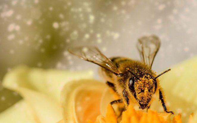 Iz cijele Hrvatske dolaze vijesti o pomoru pčela