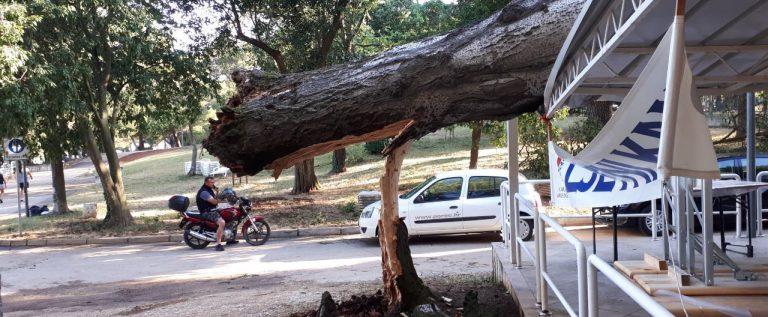 Drvo palo na nadsteršnicu na Gradskom kupalištu