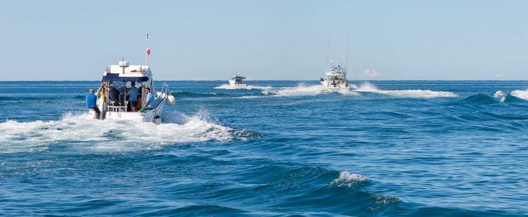više upoznavanja s ribom u moru