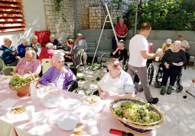Berba grožđa u Domu za starije i nemoćne osobe Poreč