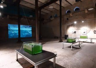 NOISE AQUARIUM do 22.09. u Povijesnom i pomorskom muzeju Istre