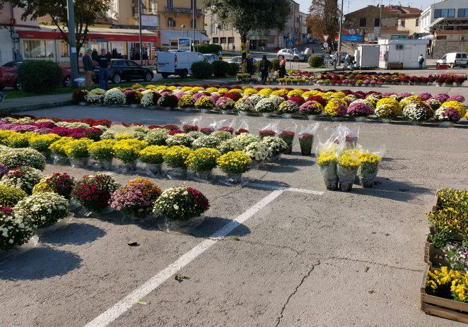 Na Velikom gradskom parkiralištu ispred tržnice krenula prodaja krizantema povodom Dana Svih Svetih