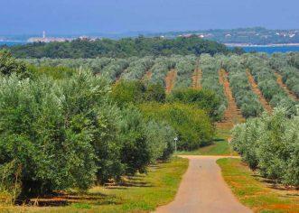 "Agrolaguna i Poljoprivredna Zadruga ""Maslinari Istre"" potpisali sporazum o suradnji"