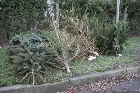 Gdje i kako besplatno zbrinuti božićna drvca