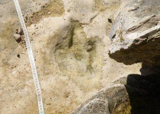 Otkriveno novo nalazište otisaka dinosaura u Istri !