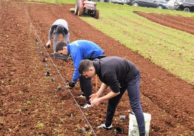 Učenici srednje škole Mate Balote proširuju aromatični vrt škole