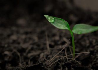 Dopušten rad vrtnim centrima i rasadnicima  te prodavaonicama rezervnih dijelova za poljoprivrednu mehanizaciju i opremu