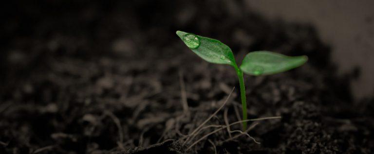 vrt-biljka5e821849d5a33