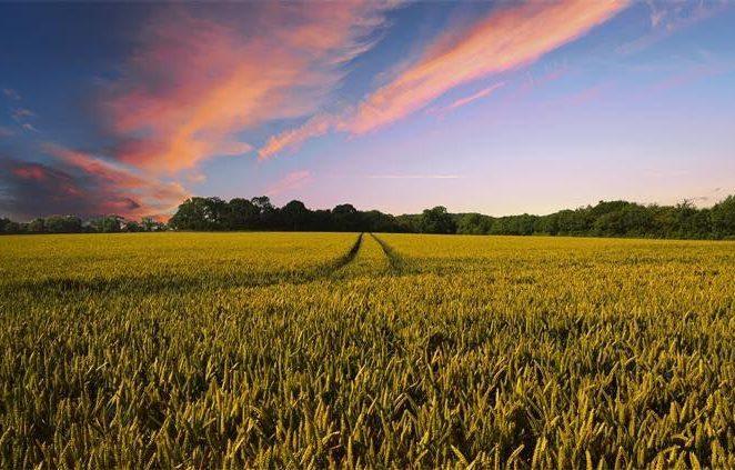 Ministarstvo poljoprivrede: Netočno je da Hrvatska vraća 3 milijardi kuna za eko proizvodnju