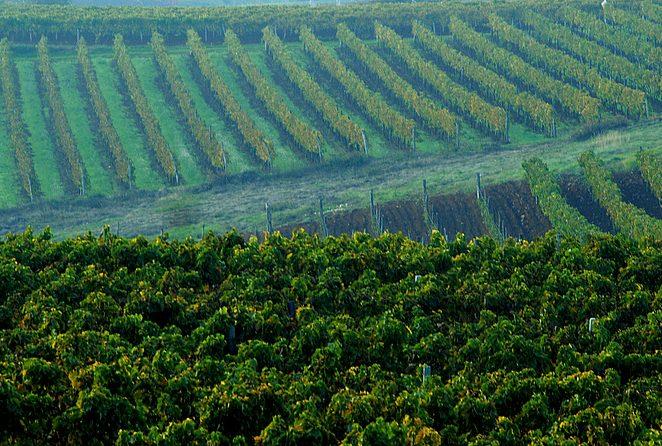Osnovano Povjerenstvo za poljoprivredu Istarske županije