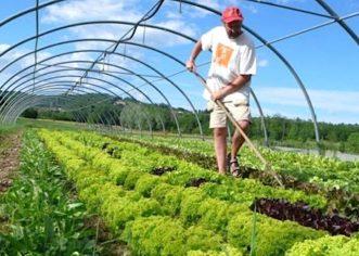 NOVA STRATEGIJA EU do 2030. želi prepoloviti uporabu pesticida i drastično povećati ekološki uzgoj