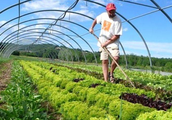Istarska županija dodjeljuje 2,3 milijuna kuna za projekte iz poljoprivrede