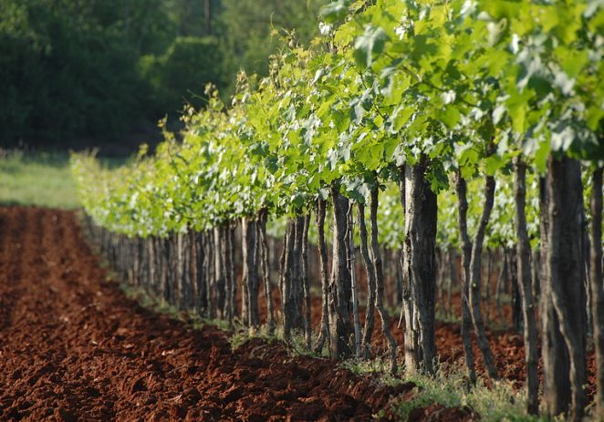 Povjerenstvo za poljoprivredu Istarske županije: Poljoprivreda je jedna od strateških grana razvoja Istarske županije