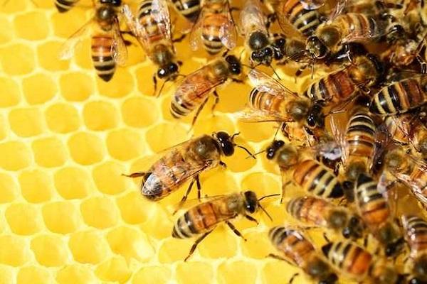 U četvrtak 8. 10. 2020. poslušajte priču o porečkim pčelarima – kod boćališta Mate Balote u 12 h