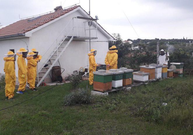 Mladi pčelari, učenici SŠ Mate Balote, već pet godina vode školski pčelinjak u suradnji sa udrugom Nektar