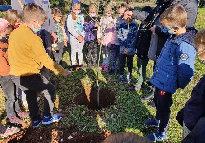 """Učenici osnovne škole Joakima Rakovca u sv. Lovreču nastavili su sa projektom """"Maslina"""" i posadili nove sadnice maslina"""