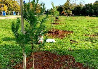U Poreču će se idućeg tjedna posaditi 500 stabala: murve, ladonje, pinije, magnolije, kesteni, hrastovi, smokve, lovori…