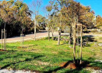 """U Poreču po drugi put rekordan interes za sadnju stabala: podijeljeno i posađeno više od 600 stabala u sklopu akcije """"Zasadi stablo, ne budi panj"""""""