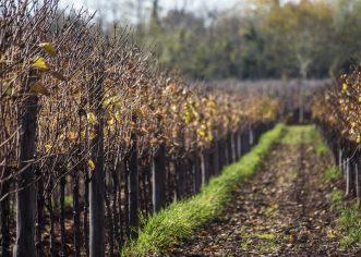 Javni natječaj za zakup poljoprivrednog zemljišta u vlasništvu Republike Hrvatske na području Općine Višnjan