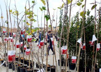 """Grad Poreč: U sat vremena podijeljeno 400 sadnica stabala u sklopu akcije """"Zasadi stablo, ne budi panj"""""""