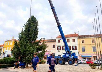 Postavlja se božićna jelka na Trgu Joakima Rakovca
