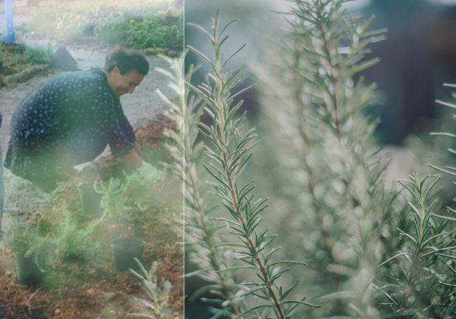 BIO ISTRA unapređuje kvalitetu života mirisnim aromatičnim biljem – Završna Zoom konferencija EKOSFERA POREČ-PUTEM RUŽMARINA