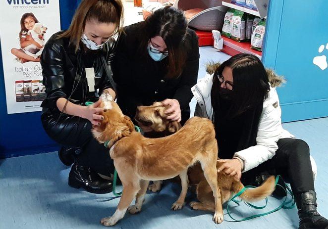 I Poreč se pridružio akciji Udruge za zaštitu životinja SOS Šape – Snoopy i Deni spašeni s područja pogođenih potresom